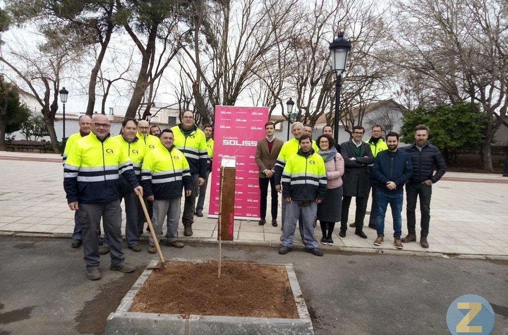 Fundación Cadisla colabora con el Ayuntamiento de Tomelloso y Fundación Soliss en la recuperación del Olmo