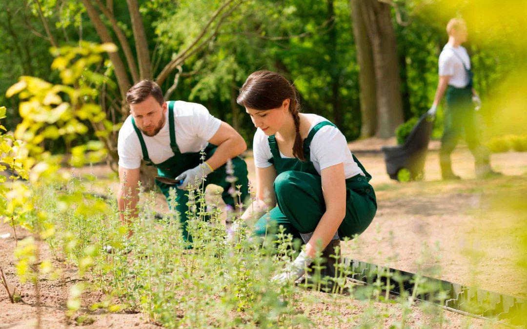 Renovación conservación zonas verdes de Tomelloso