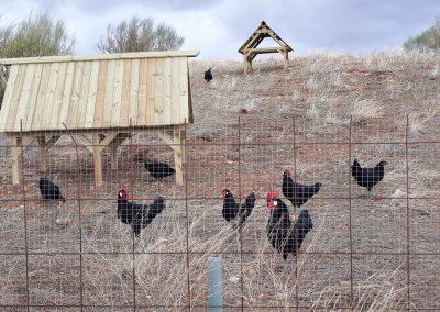 Equipamiento para Granja Avícola Ecológica